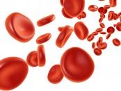 plasma-rico-en-plaquetas